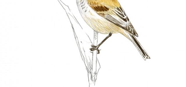 Sábado, 28 de mayo de 2016 a las 10:00 horas Paseo ornitológico por Velilla de San Antonio (Ornitología parte de la zoología que estudia las aves) Iremos al encuentro del […]