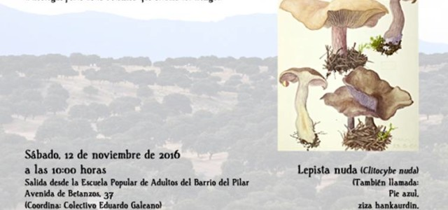 Sábado, 12 de noviembre de 2016 a las 10:00 horas En busca de Lepista nuda Comenzamos nuestros paseos mañaneros de fin de semana Nos acercaremos a El Pardo a por […]